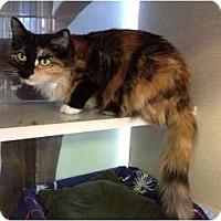 Adopt A Pet :: Sassy - New York, NY