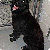Adopt A Pet :: Sampson - Wayne, NJ