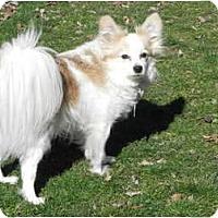 Adopt A Pet :: Rufus - 84, PA