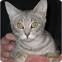 Adopt A Pet :: Elvis and Elsie - Cincinnati, OH
