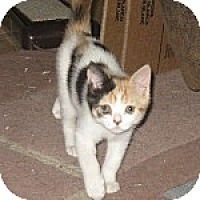 Adopt A Pet :: K-Sissy5-Hera - Colorado Springs, CO
