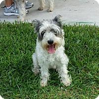 Adopt A Pet :: Elsa - Kingwood, TX