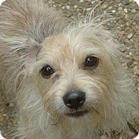 Adopt A Pet :: Reno - North Little Rock, AR