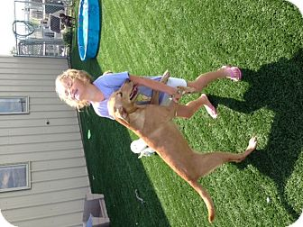 Labrador Retriever Mix Puppy for adoption in St. Charles, Illinois - Sadie