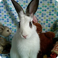 Adopt A Pet :: Hudson - Williston, FL