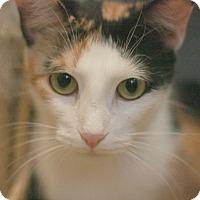Adopt A Pet :: Sunny - Canoga Park, CA