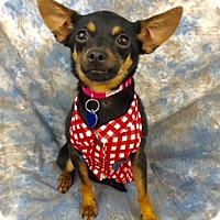 Adopt A Pet :: Jessa - Lake Elsinore, CA