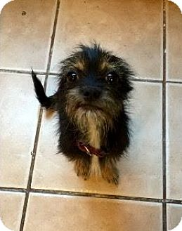 Terrier (Unknown Type, Small) Mix Dog for adoption in Hartford, Connecticut - Belle
