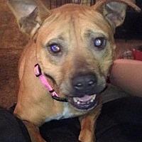 Adopt A Pet :: Reason - Cameron, NC