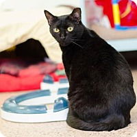 Adopt A Pet :: Serenity - Philadelphia, PA