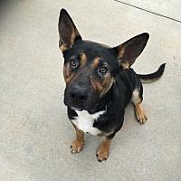Adopt A Pet :: Max (CL) - Greensboro, NC
