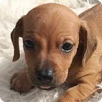 Adopt A Pet :: Josh Reddick - Houston, TX