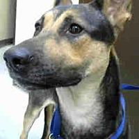 Adopt A Pet :: URGENT on 08/12 BIG BEAR - San Bernardino, CA