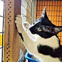 Adopt A Pet :: Mario - Tucson, AZ
