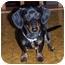 Photo 2 - Dachshund Dog for adoption in Owatonna, Minnesota - Monty