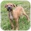 Photo 1 - Labrador Retriever/Beagle Mix Puppy for adoption in Windham, New Hampshire - Becks