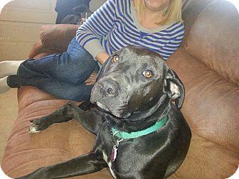 Labrador Retriever Mix Dog for adoption in Lexington, Kentucky - Roxey