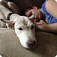 Adopt A Pet :: Gabriella (Gabby) - Wadsworth, OH