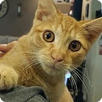 Adopt A Pet :: Spencer - Chandler, AZ
