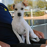 Adopt A Pet :: Colin - Weatherford, TX