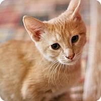 Adopt A Pet :: Sunny - San Antonio, TX