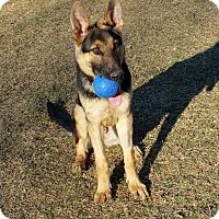 Adopt A Pet :: Vechtar - Chambersburg, PA