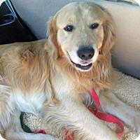 Adopt A Pet :: River - BIRMINGHAM, AL