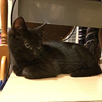 Adopt A Pet :: Shy Guy - Loveland, CO