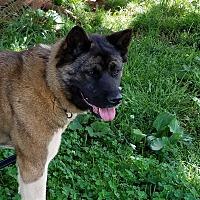 Adopt A Pet :: Kyoshi - Stuart, VA