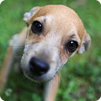 Adopt A Pet :: Javier - Hagerstown, MD