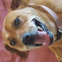 Adopt A Pet :: Courage - Las Cruces, NM