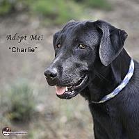 Adopt A Pet :: Charlie - Acton, CA