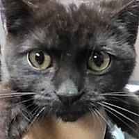 Adopt A Pet :: Nataliya - Medina, OH
