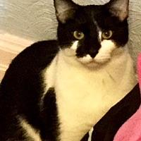 Adopt A Pet :: Kartoon - Walled Lake, MI