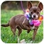 Photo 2 - Chihuahua Dog for adoption in Portsmouth, Rhode Island - Tiffany- w/video!