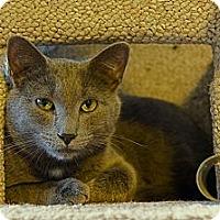 Adopt A Pet :: JJ - Victor, NY