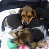 Adopt A Pet :: Omar - Phoenix, AZ