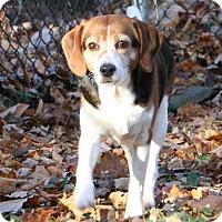 Adopt A Pet :: Keifer Henderson - Waldorf, MD