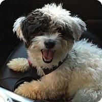 Adopt A Pet :: Jean Luc - Chicago, IL