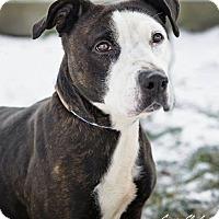 Adopt A Pet :: Christina - ADOPTED! - Zanesville, OH
