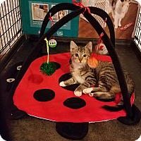 Adopt A Pet :: Montero - Geneseo, IL