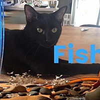 Adopt A Pet :: FISH - Lawton, OK