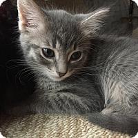 Adopt A Pet :: Rainbow Jazz - Sterling Hgts, MI
