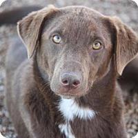 Adopt A Pet :: Panto - Video! - Mahwah, NJ