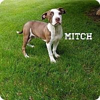 Adopt A Pet :: Mitch - Southington, CT