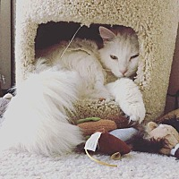 Adopt A Pet :: Lula - Hoffman Estates, IL