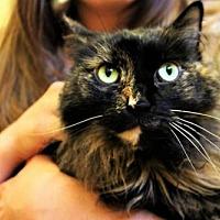 Adopt A Pet :: Dawn - Denver, CO
