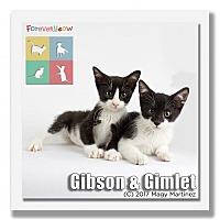 Adopt A Pet :: Gimlet - Palm Desert, CA