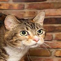 Adopt A Pet :: RIGBY - Alameda, CA