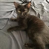 Adopt A Pet :: Linus - Virginia Beach, VA